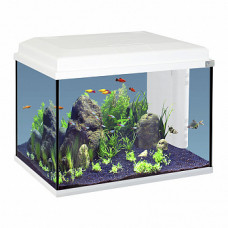 Aquatlantis Start 55 Аквариум 55л. 55х30х34,8см ,LED-светильник 6w ,Фильтр Mini Biobox 2
